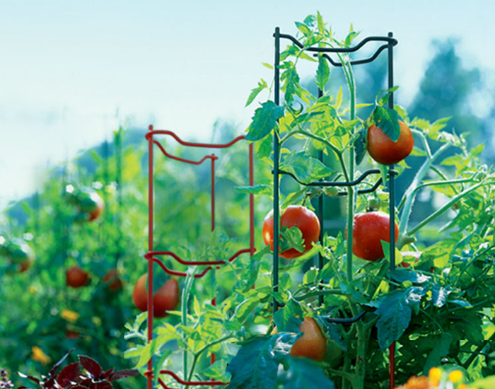 Tomato Growing Ladder