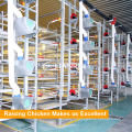 Tianrui Raising Broiler Poultry Automatic Birds Feeding System