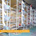 Tianrui criação de frangos de corte de aves aves automático sistema de alimentação