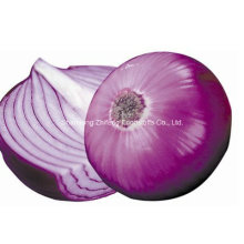 Red Onion Exporting From China