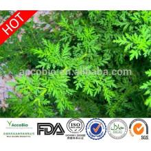 100% Puro Artemisinina Tablet Ingredientes Artemisinina Em Pó
