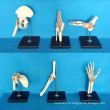 Instrumento médico Modelo de Peças do corpo de esqueleto humano (R020901)