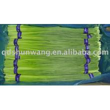 2011 chinesischen frischen grünen Knoblauch sprießen