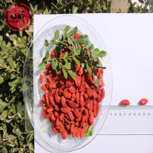 Tonic Herb Goûts Great Organic Goji Berries