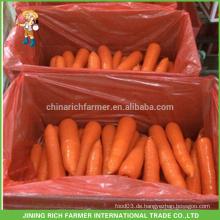 China New Crop Frische Karotte nach Kuwait