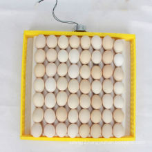 Excellent Plastic Egg Tray With Sturdy