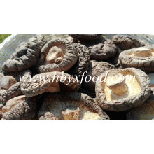 Champignons shiitake secs et bien emballés