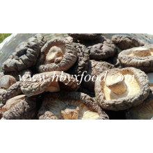 Cogumelo Shiitake Suave Seco com Pacote Agradável
