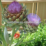 100% Natural Extract Powder Artichoke