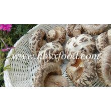 Getrockneter Blumen-Pilz, China-Shiitakepilz, gesundes Lebensmittel
