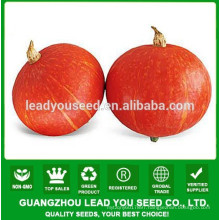 JPU05 Hongguo Yellow hybrid pumpkin seeds, flavor pumpkin seeds f1
