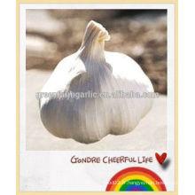 Chine nouvelle exportation d'ail blanc frais