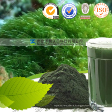 Bulk Wholesale Superfood Losing Weight Use Spirulina Powder