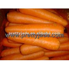 Zanahoria roja fresca