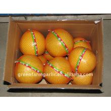Greenfarm Pomelo, Sweet Pomelo 2011 New Corps