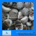 fresh frozen moon snail meat