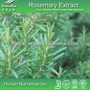 GMP Standard Manufacturer Supply Rosemary Extract,6%-80%Carnosic Acid