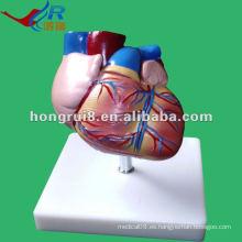 Modelo de la anatomía del corazón del tamaño de la vida del nuevo estilo de ISO, modelo humano del corazón
