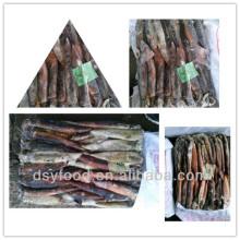 Fabrikkalotte / gefrorener illex sqid / gefrorener argentinischer Tintenfisch