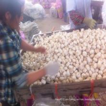 Fábrica china de la granja del ajo fresco en Shandong