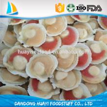 Concha de concha congelada de alta qualidade