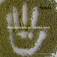 China Vigna radiata for new crop
