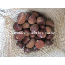 2015 Crop Fresh Chestnut