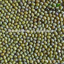 Green Mung Bean Export