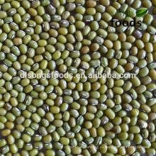Зеленый Мунг Экспорт Зерна