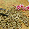 Hanfsamen zum Verkauf Samen für Vogel und Öl machen
