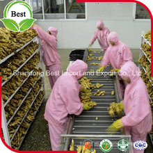 Jengibre fresco orgánico de alta calidad