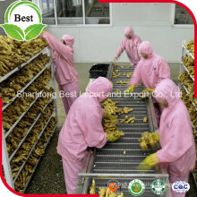 High Quality Organic Fresh Ginger