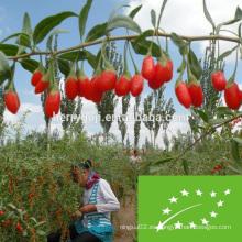 Certificado de la UE Orgánica Goji bayas fábrica suministro