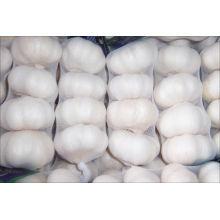 Normaler weißer frischer Knoblauch; Reine weiße Knoblauch