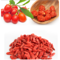 Top Quality Hypotensive Goji berry konvensional