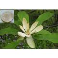 100% чистый натуральный экстрактом листьев Damiana / Turnera Aphrodisiaca (экстракт для секса)
