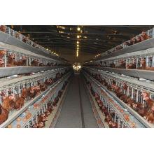 Cage de couche de poulet galvanisée de type H