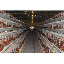 Galvanized H Type Chicken Layer Cage