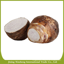 Hot sale fresh taro