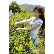 Individuel Quick Freezin-IQF Organic Blackberry Zl-016