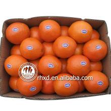 nom de tous les fruits jaunes navel orange mandarine citron agrume