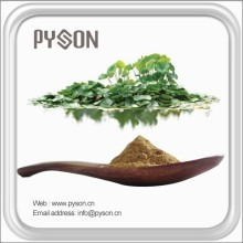 factory direct natural lotus leaf plant extract with great price