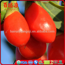 Fresh fruit goji berry goji berry fiyat goji berries vietnam