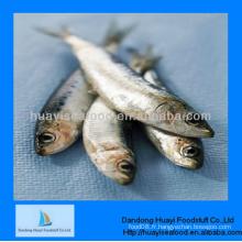 Fournissent des sardines savoureuses et fraîches congelées en vente