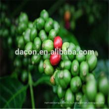 экстракт зеленого кофе в зернах порошок