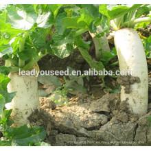 MR13 Huyu blanco f1 semillas de rábano híbrido para plantar