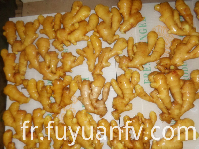 export to USA fresh ginger