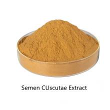 Buy online active ingredients Semen CUscutae Extract powder
