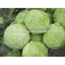 chinese round cabbages