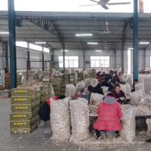 Jin xiang Garlic market
